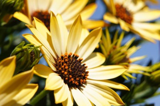 flower-108685